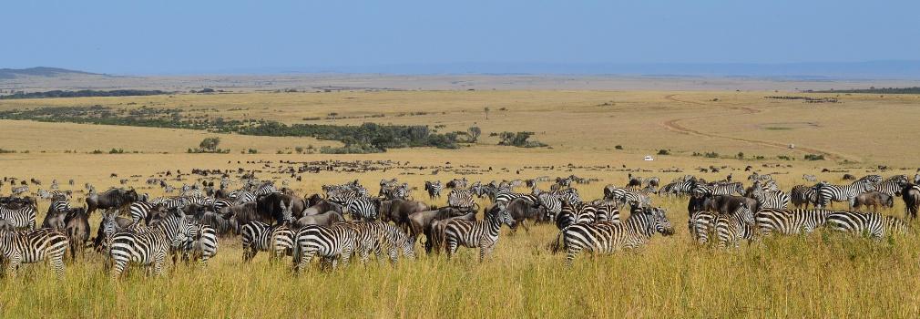 Zebra's in Kenia