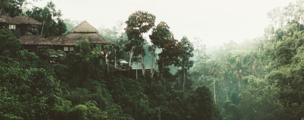 Oerwoud in Sri Lanka